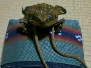 蛙とミンサー
